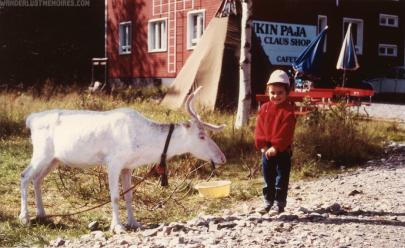 Il mio primo incontro con una renna